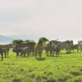 Isolated BSE outbreak confirmed in Scotland