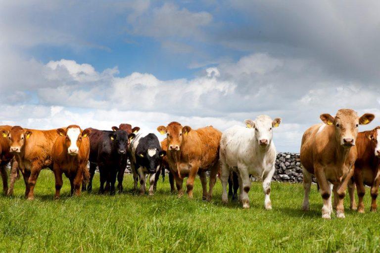 Цены на КРС, цены на говядину, цены на скот, импорт говядины, торговля говядиной, зарубежные новости