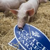 Pig industry highlights commitment to antibiotic best practice