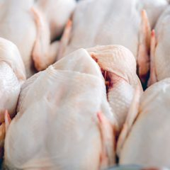 Global poultry markets  expected to see some recovery  under fragile conditions