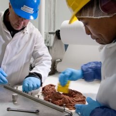 Meat testing in Scotland reports incorrect DNA