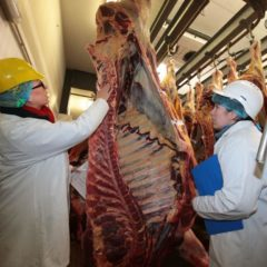 Project aims to ensure high quality for Welsh Beef