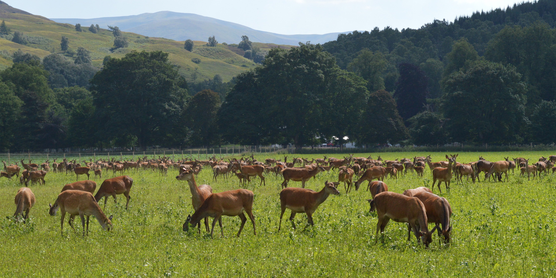 Scottish Government Confirms Venison Research Funding