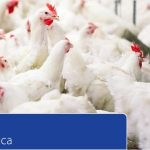 African Poultry Market 'Time for Africa'