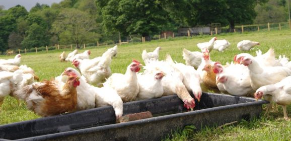 Poultry farm bumps up production following surge in sales