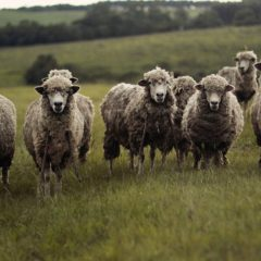 Call for beef and sheep levy board to listen to sector voices